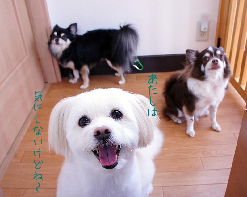 モコちゃん★_d0265342_1852783.jpg