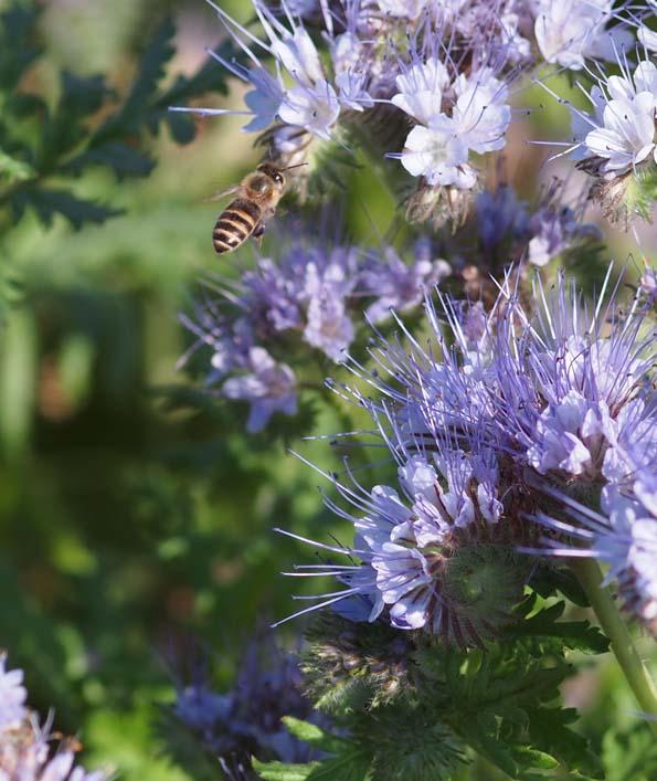 蜜蜂 - Ⅰ_d0149245_21522811.jpg
