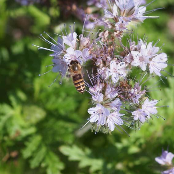 蜜蜂 - Ⅰ_d0149245_21524134.jpg