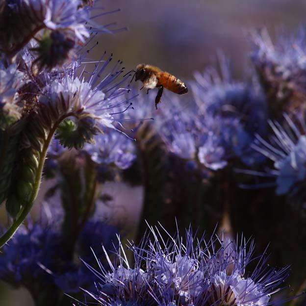 蜜蜂 - Ⅰ_d0149245_21533555.jpg