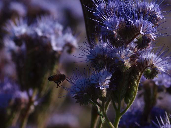 蜜蜂 - Ⅰ_d0149245_2153469.jpg