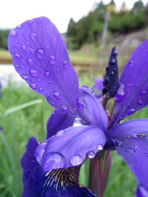 雨の後に_d0231263_21315743.jpg