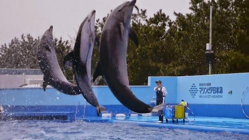 新潟の水族館_e0266363_038572.jpg