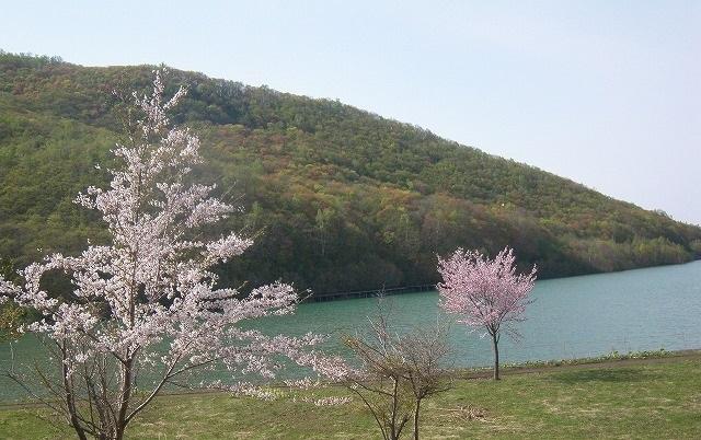 黄葉と桜_f0281095_17443131.jpg