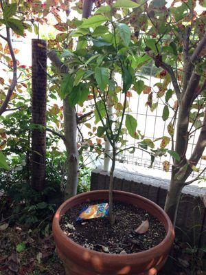 庭の悲喜こもごも_f0101201_14324615.jpg