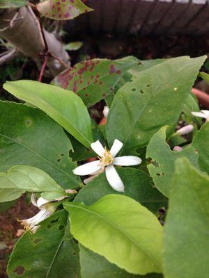庭の悲喜こもごも_f0101201_14324721.jpg