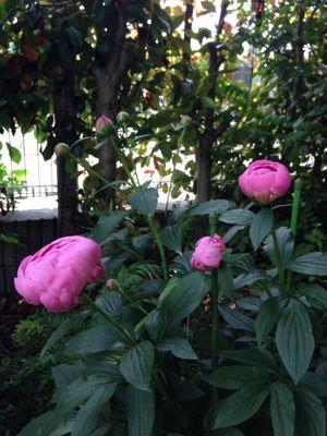 庭の悲喜こもごも_f0101201_14324871.jpg