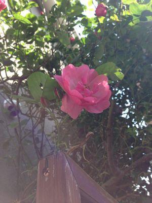 庭の悲喜こもごも_f0101201_14324916.jpg