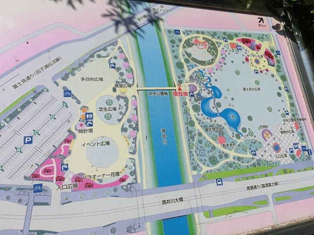 風がさわやか! 30年が経過し、風格が備わった富士中央公園_f0141310_738334.jpg