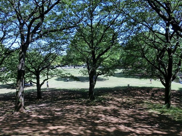 風がさわやか! 30年が経過し、風格が備わった富士中央公園_f0141310_7391758.jpg