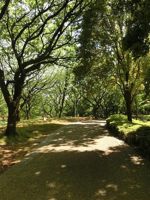 風がさわやか! 30年が経過し、風格が備わった富士中央公園_f0141310_7394514.jpg