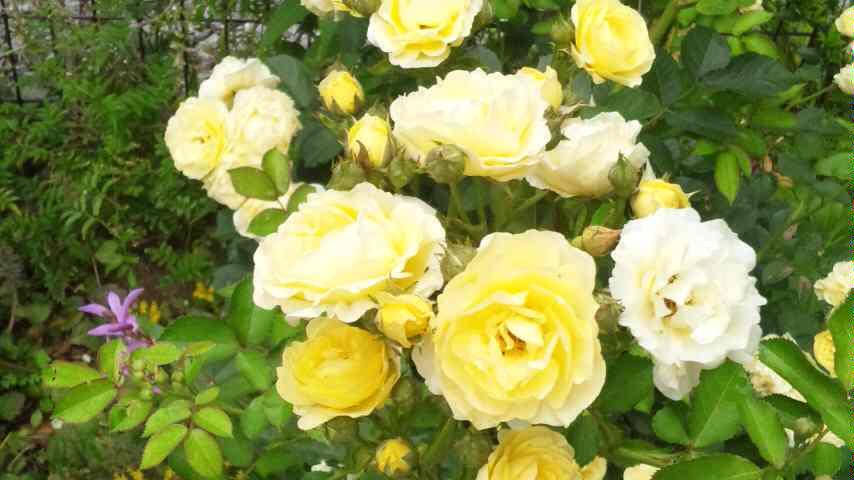 庭もよう_d0085018_11595022.jpg