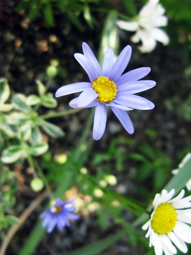 ブルー・ガーデン_f0129726_2251128.jpg