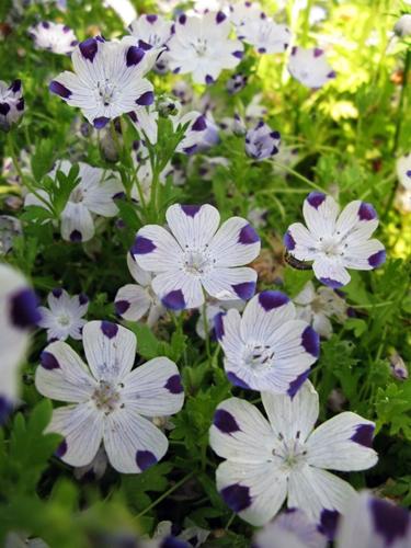 ブルー・ガーデン_f0129726_22525657.jpg