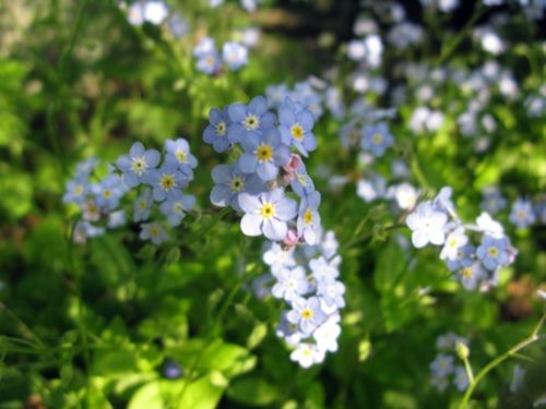 ブルー・ガーデン_f0129726_22543656.jpg