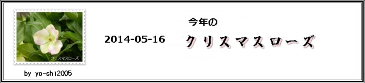 e0033229_2011847.jpg