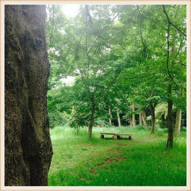 森が好き…_f0337132_18523680.jpg