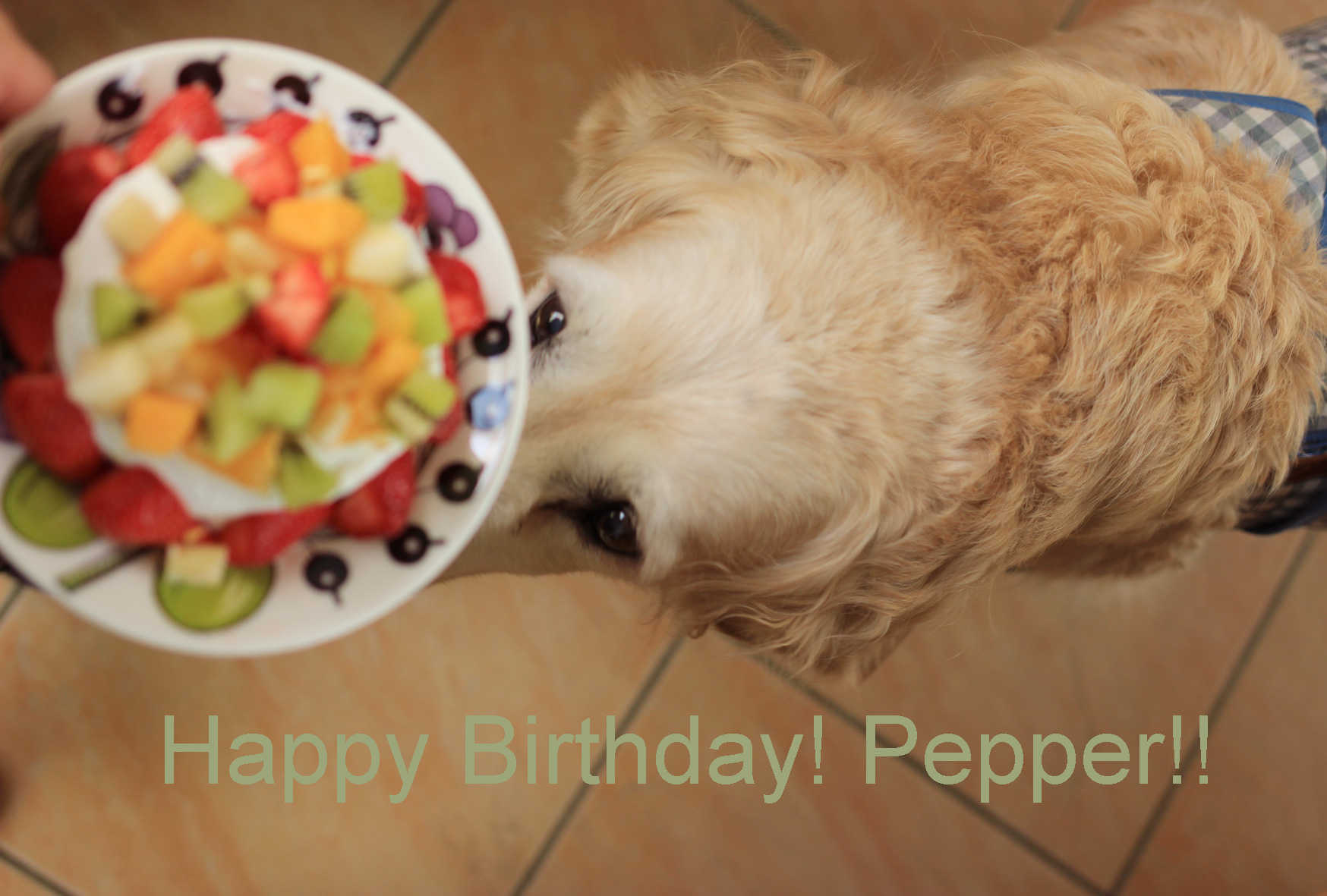 Pepper\'s Birthday_f0180147_10154761.jpg