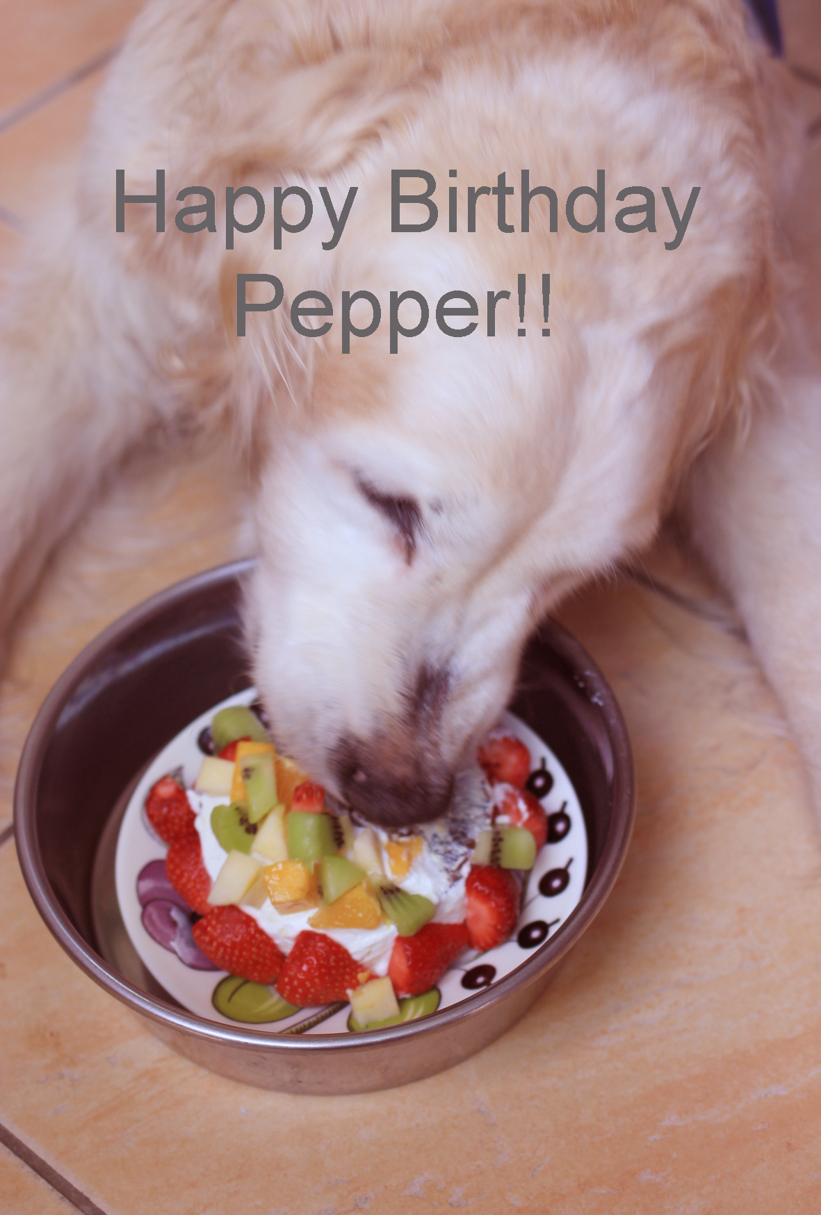 Pepper\'s Birthday_f0180147_1043418.jpg