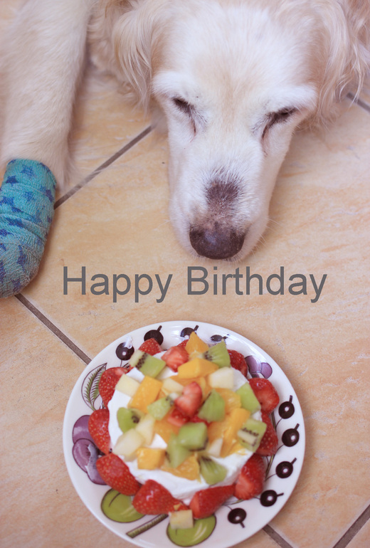 Pepper\'s Birthday_f0180147_9581844.jpg