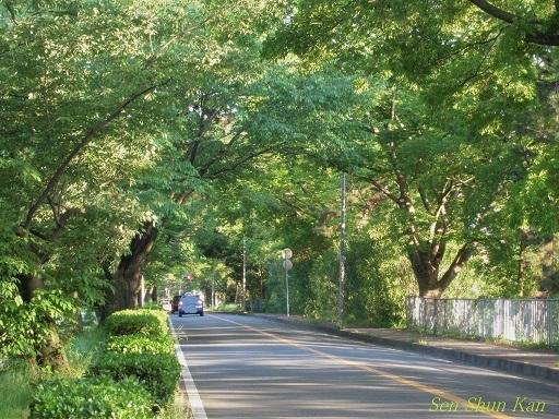 加茂街道の緑 2014年5月16日 _a0164068_23312880.jpg