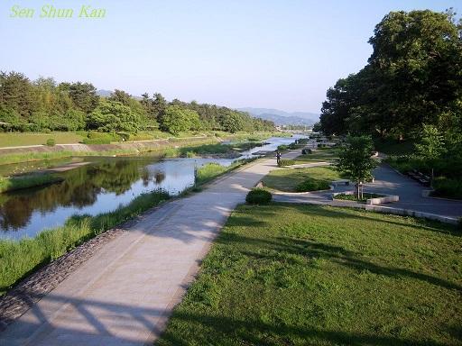 加茂街道の緑 2014年5月16日 _a0164068_23315969.jpg