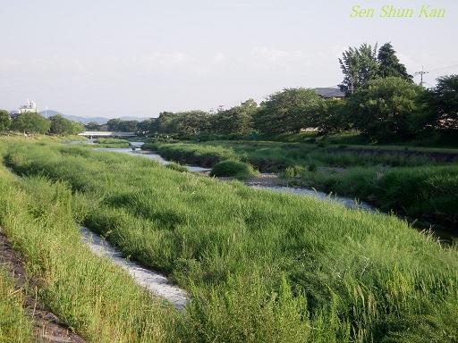 加茂街道の緑 2014年5月16日 _a0164068_23323213.jpg