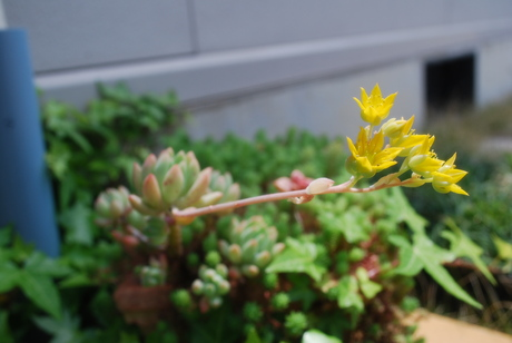 庭の彩り_d0251580_17594761.jpg