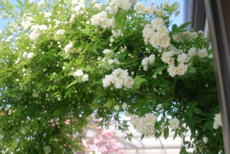 庭の彩り_d0251580_1801722.jpg