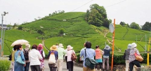 現地講座 「和束町の茶畑ハイキング」を開催しました!_b0067283_11281314.jpg