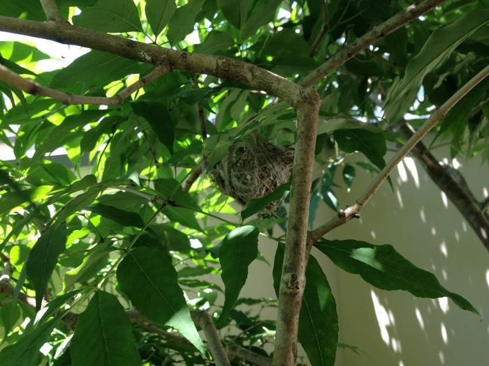 メジロの巣を見に行く_f0223603_14481224.jpg