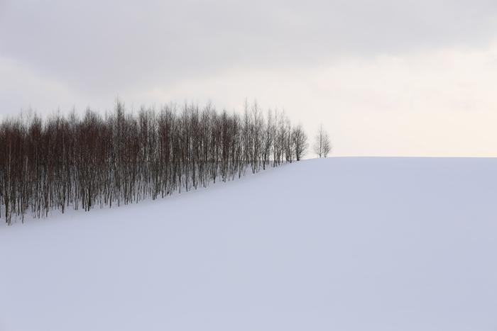 北の住まい設計社カフェ と 美瑛の風景_f0179404_99595.jpg