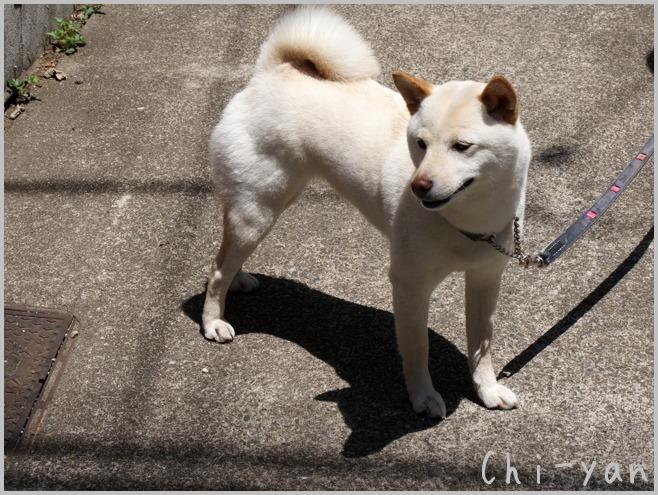お散歩仲間_e0219011_14201847.jpg