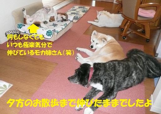 f0121712_1361592.jpg