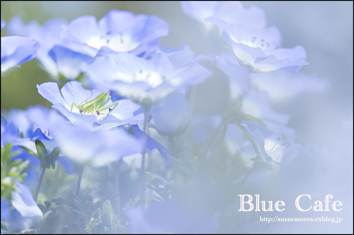 Blue Cafe_f0100215_0211751.jpg