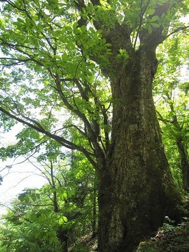 森林セラピー_b0157216_22123057.jpg