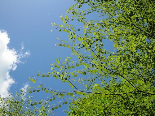 森林セラピー_b0157216_2212879.jpg