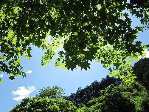 森林セラピー_b0157216_221483.jpg