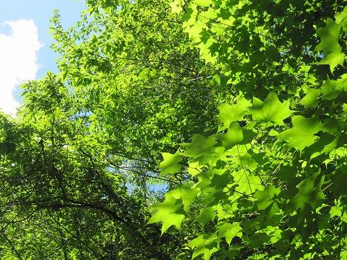 森林セラピー_b0157216_2275571.jpg