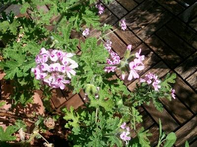 花咲いてきました…_d0318916_10142795.jpg