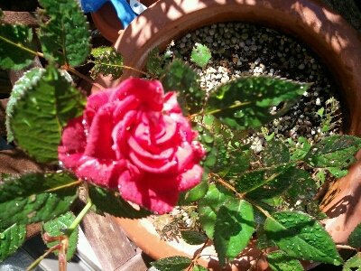 花咲いてきました…_d0318916_1014696.jpg