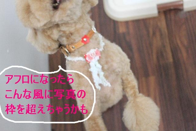 紹介しまぁ~す!!_b0130018_231036.jpg
