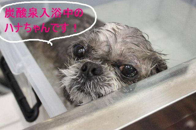 紹介しまぁ~す!!_b0130018_23114091.jpg