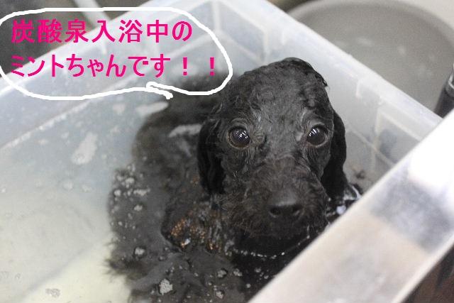 紹介しまぁ~す!!_b0130018_23122939.jpg
