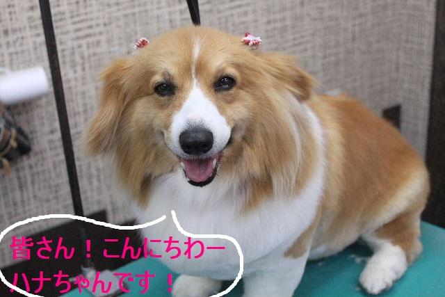 紹介しまぁ~す!!_b0130018_23163544.jpg