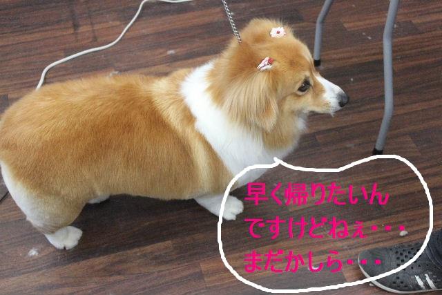 紹介しまぁ~す!!_b0130018_231645100.jpg