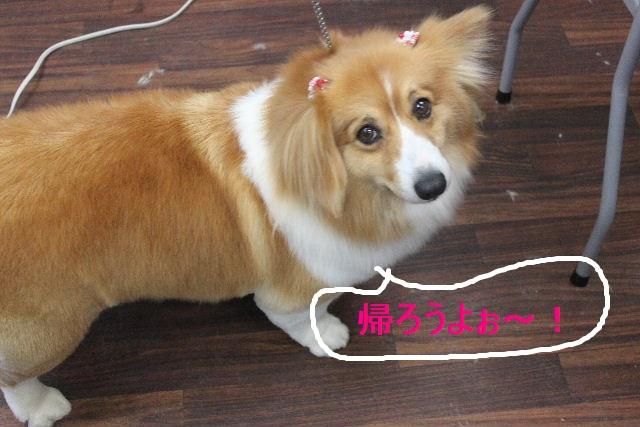 紹介しまぁ~す!!_b0130018_23165061.jpg