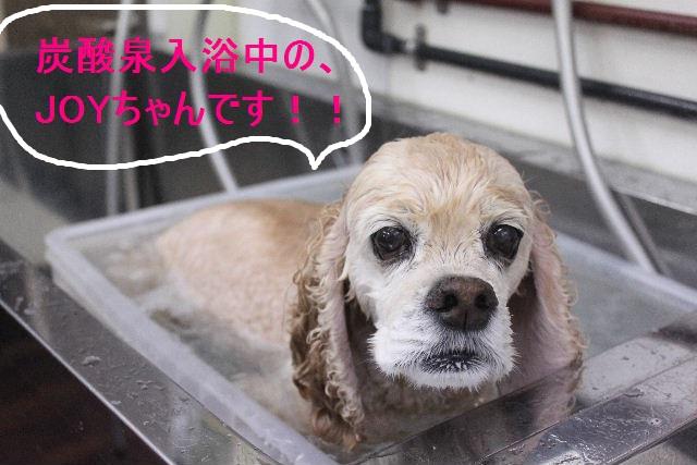 紹介しまぁ~す!!_b0130018_2332158.jpg