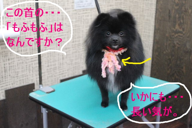 紹介しまぁ~す!!_b0130018_2364328.jpg