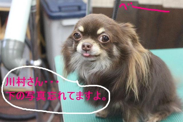 紹介しまぁ~す!!_b0130018_2381784.jpg